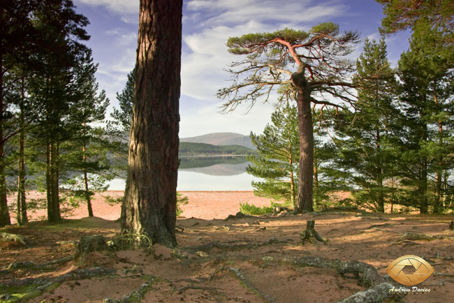 View from Glenmore campsite across Loch Morlich Scottish Highlands print