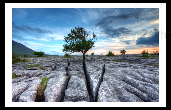 Limestone Pavements Malham Ingleton Yorkshire Landscape print photo