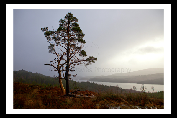 cairngorms national park photo